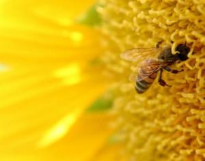 Terapii complementare: Veninul si ceara de albine